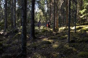 006försvinner i skogen