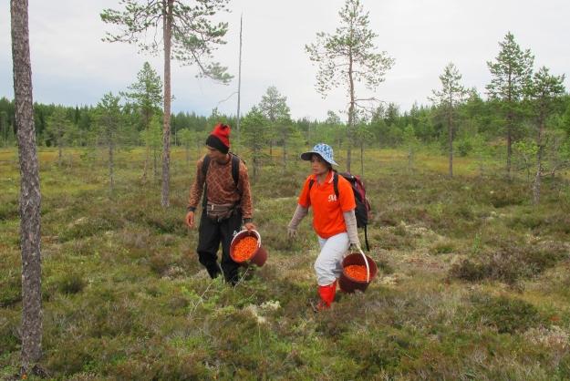 Långmyran, Degerfors socken 2012-1